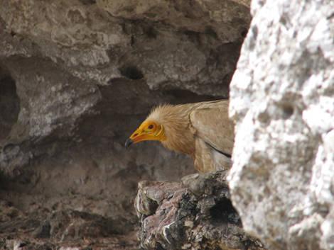 vautours_inconnu